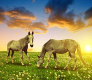 Two Horses Stock Image