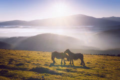 two horses in mountain caressing Stock Images