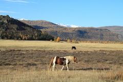 Two horses in mountains Stock Photos
