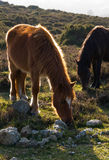 Two horses in the nature Royalty Free Stock Photo