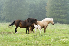 Two horses and newborn foal Stock Photo