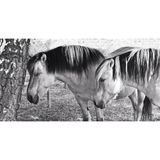 Two horses in black and white during summer stock illustration