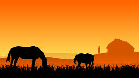 Two horses on pasture. At sunset in summer Stock Photo
