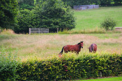 Two horses on the pasture Stock Photo