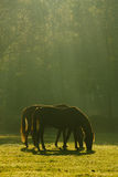 Two horses in peaceful harmony Royalty Free Stock Images