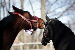 Two horses play Stock Photo