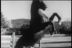 Two horses playing in corral stock footage