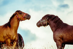 Two horses playing together royalty free stock images