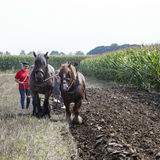 Two horses and plough in dutch field in the netherlands Stock Photo