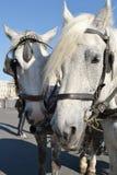 Two horses. Royalty Free Stock Photos