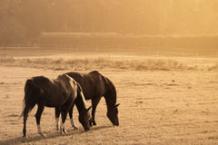 Two horses in a prairie Stock Photo