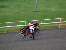 Two Horses race neck and neck Royalty Free Stock Photo