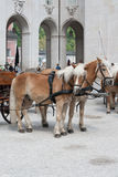 Two horses ready to pull carriage in Salzburg, Stock Images