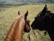 Two horses ready to ride Stock Images