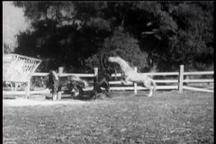 Two horses rearing up in corral stock video footage