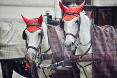 Two horses in red caps, Vienna, Austria Royalty Free Stock Photography