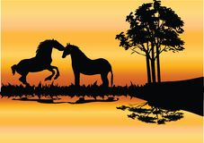 Two horses on the river Stock Image
