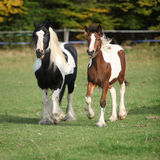Two horses running on pasturage Royalty Free Stock Photography