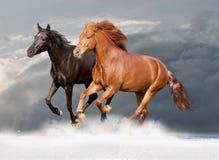 Two horses runs Stock Photos