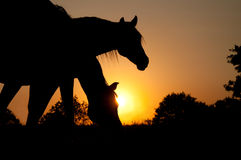 Two horses silhouetted against rising sun Royalty Free Stock Image