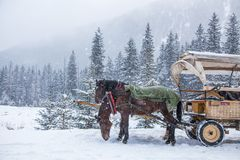 Two horses on a snowy winter day.  Royalty Free Stock Photography