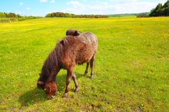 Two horses in the Spring meadow Royalty Free Stock Images