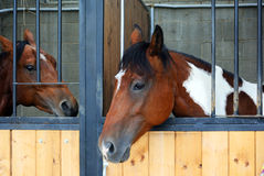 Two horses in the stable Royalty Free Stock Photos
