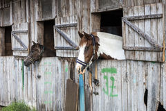 Two horses in stable Stock Photo