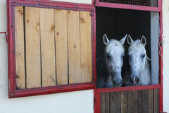 Two horses in stable Stock Image