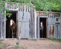 Two horses in stables. Two horses standing in their stable on a hobby farm Stock Image