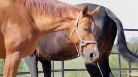 Two horses at summer day stock footage