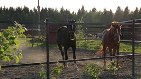Two horses at summer day stock video footage