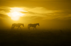 Two horses in the Sunrise_toned Stock Images
