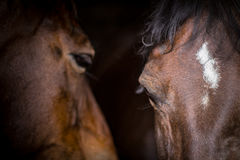 Two horses in their stable Royalty Free Stock Photos
