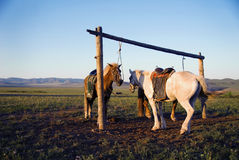 Two Horses Tied Post Together Open Field Concept Royalty Free Stock Photos