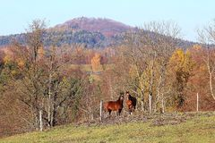 Two horses under the hill. In Bohemian Swizerland, Czech republic stock images