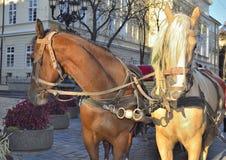 Two horses waiting Royalty Free Stock Image