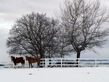 Two Horses on a Winter Day. This image of the horses, fence, wagon and trees was taken in western MT Royalty Free Stock Images
