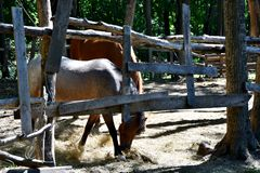 Two horses in a wooden paddock lit by the sun Stock Images