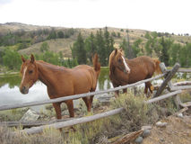 Two horses in Wyoming Royalty Free Stock Photos