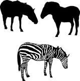 Two horses and zebra Stock Images