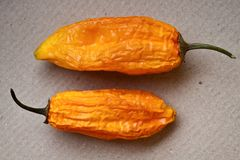 Two Hot Orange Peppers Royalty Free Stock Photo