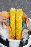 Two huge boiled cobs of corn lie on the seller`s bucket. Krasnodar Territory, Russia. Stock Photography