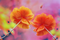 Two huge red poppy flowers on a very colorful multicolored bright background. Joyful feelings, summer mood. Artistic effect Stock Photo