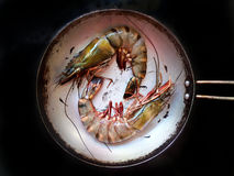 Two huge shrimp Royalty Free Stock Images
