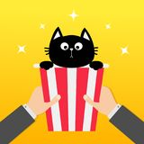 Two human businessman hands holding popcorn box with black cat. Movie Cinema icon in flat design style. Pop corn. Yellow gradient. Background. Shining stars Royalty Free Stock Photo