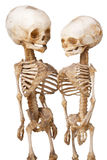 Two human medical skeleton Stock Photo