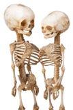 Two human medical skeleton. Two children's human medical skeleton over white stock photo