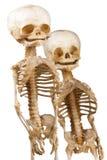 Two human medical skeleton. Two children's human medical skeleton over white Stock Photos