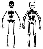 Two Human Skeleton. Vector Stock Image